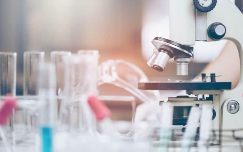 Immunsystem - wissenschaftliche Erkenntnisse